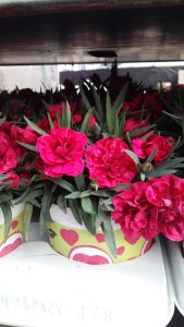 clavel rouge