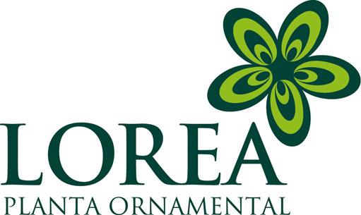 Lorea · Planta Ornamental