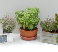 Composiciones plantas aromáticas