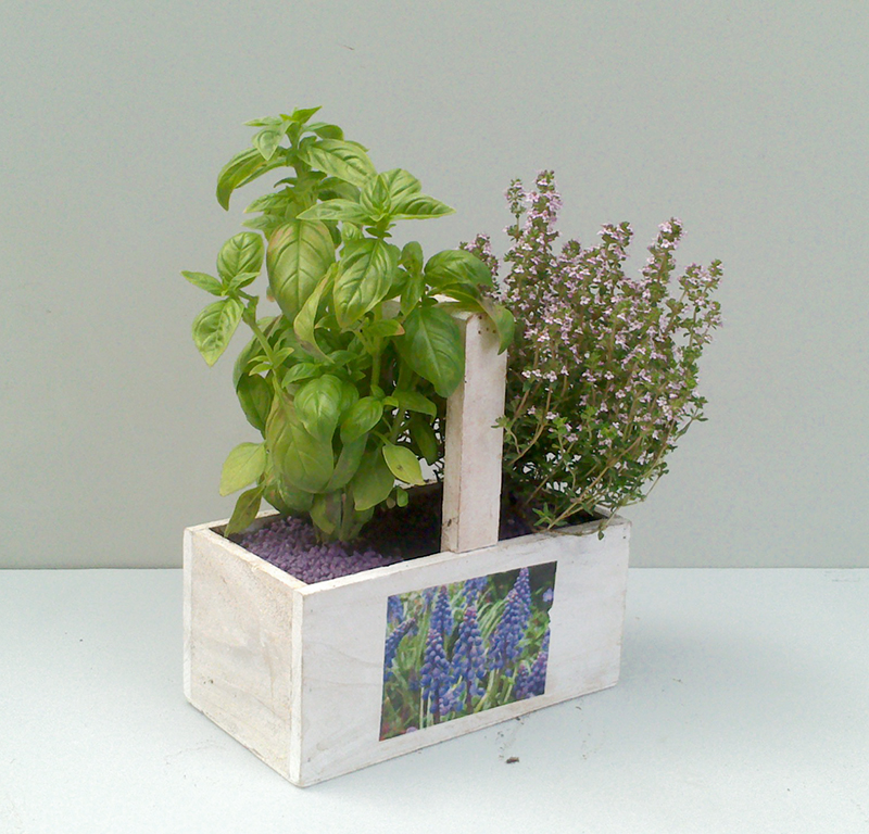 Plantas aromaticas interior top decoracin sencilla de for Plantas aromaticas interior