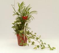 6,20€ ·Plantas en vaso rojo