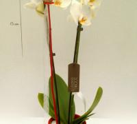 14,70€ · Phalaenopsis en vaso rojo